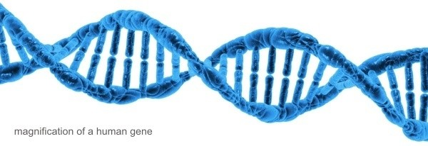 Extreme magnification of a human gene - New Life Genetics
