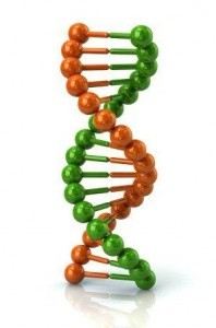 DNA, Nutrigenetics and nutrigenomics