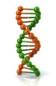 DNA, Nutrigenetics and nutrigenomics