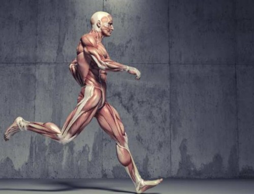Slow-twitch vs fast-twitch muscle fibres and genetic predispositions